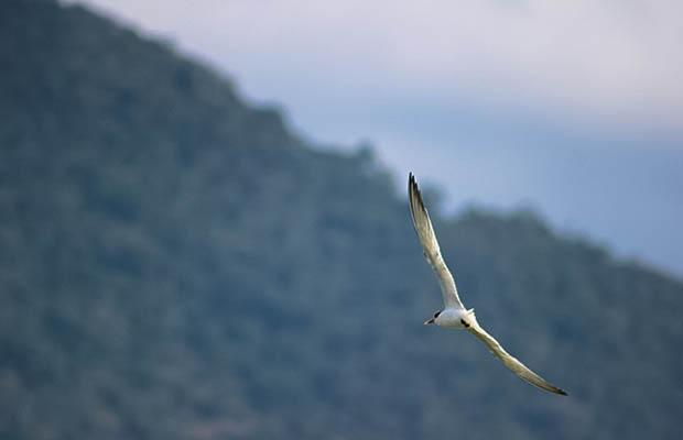Sobre fotografar gaivotas ♥