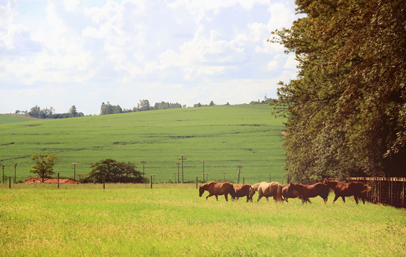 ferias4, Porecatu, Paraná, Fazenda, Projeto Fotográfico