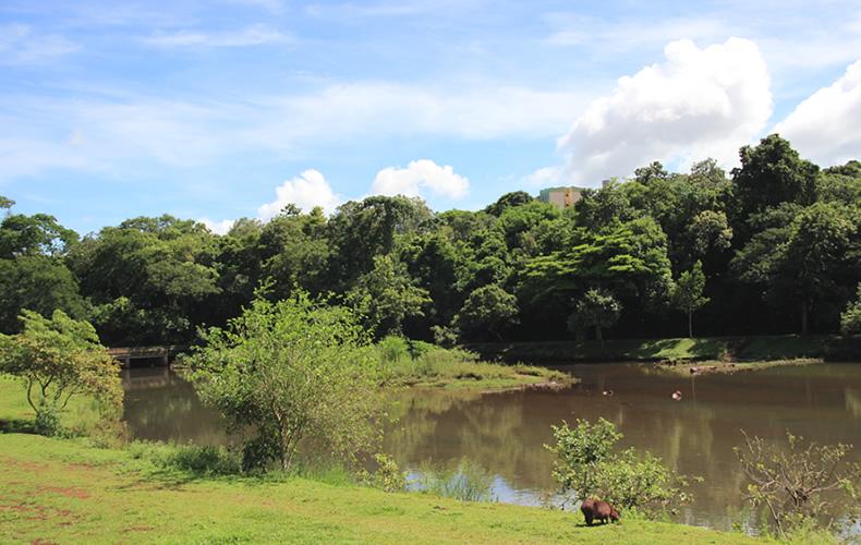 parque, Diário de viagem: Parque Arthur Thomas