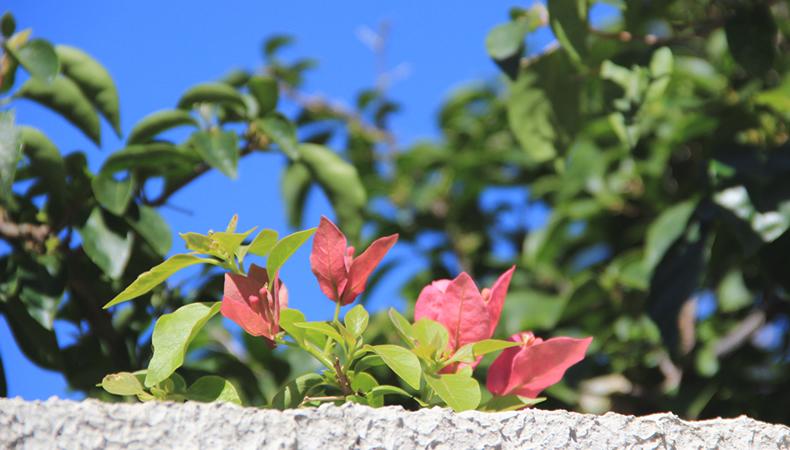 flores2, Flortografando: mais perfume e beleza num click