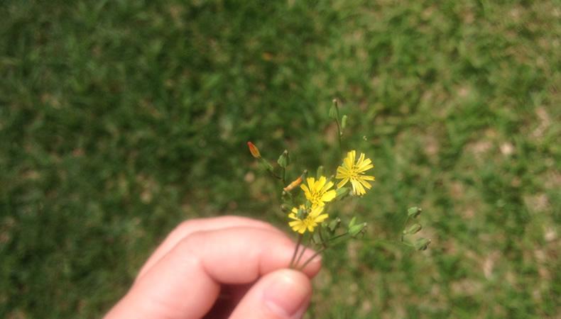 flores1, Flortografando: perfume e beleza em cada flor pelo caminho