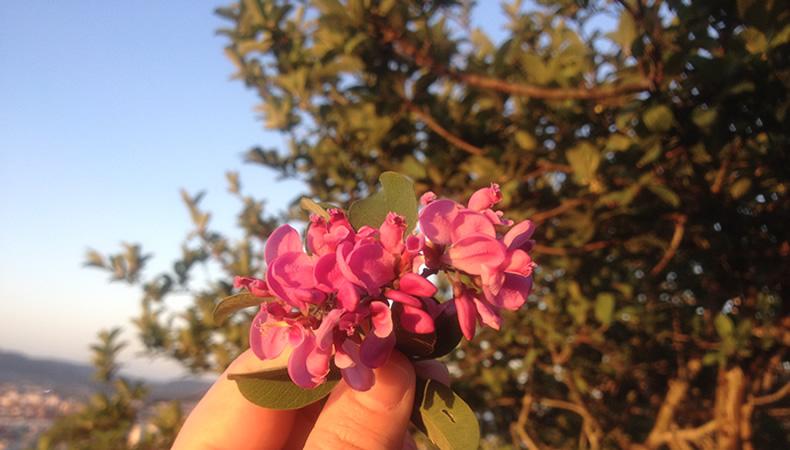 flores2, Flortografando: perfume e beleza em cada flor pelo caminho