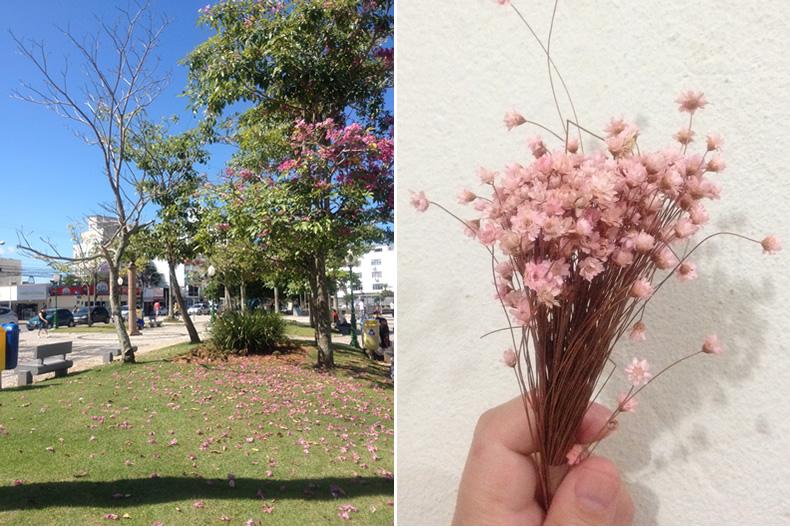 flores6, Flortografando: perfume e beleza em cada flor pelo caminho