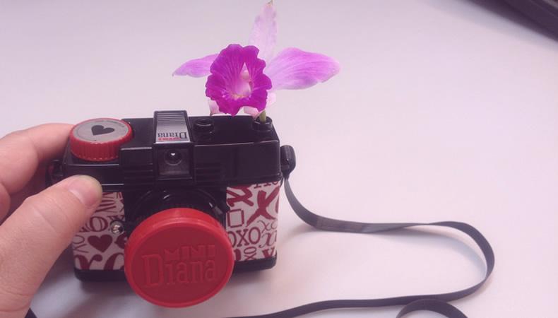 flores7, Flortografando: perfume e beleza em cada flor pelo caminho